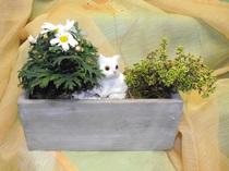 Blumen Katze Riedl Ybbsitz Waidhofen
