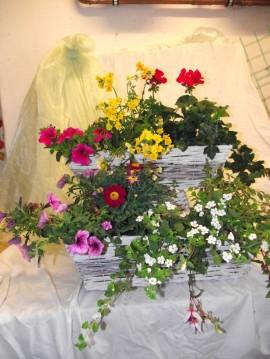 Blumen Balkonblumen Ybbsitz Waidhofen Sträuße Strauß Gesteck